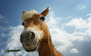 horse_with_grass_1920x1200